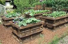 jardin carré potager potager en carre avec des palettes en bois et potager