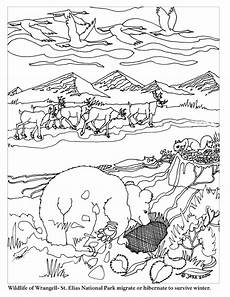 animal migration worksheets 14057 7 best images of animal hibernation and migration worksheets animal migration coloring pages