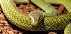 serpenti da tenere in casa cosa mangiano i granchi trovami