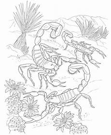 animals coloring pages 16923 coloring pages for adults realistic animals search insect coloring pages animal