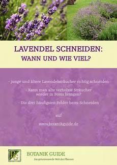 Lavendel Schneiden Wann Und Wie Viel Garten Pinny