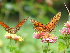 Malvorlage Schmetterling Mit Blume Rahmen Mit Blumen Und Schmetterling Der