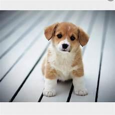 hunderassen mit bild hunderasse auf bilder name tiere hund haustiere