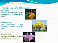 simbolos naturales de coro simbolos naturales de venezuela