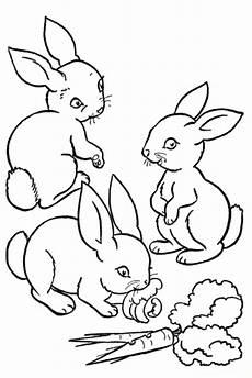 wellcome to image archive gratis ausmalbilder kaninchen