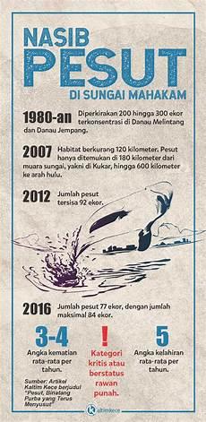 Gambar Hewan Ikan Pesut Gambar Ikan Hd