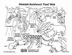 rainforest animals coloring pages preschool 17131 17 best images about preschool rainforest on toys rainforests and