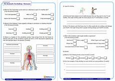 science worksheets ks1 12264 year 6 science assessment worksheet with answers humans including animals teachwire teaching