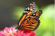 flower images hd gif 7 wonders of the world butterfly hd photos wallpapers