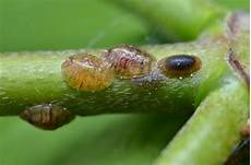 most common house plant pests their treatments t5 grow