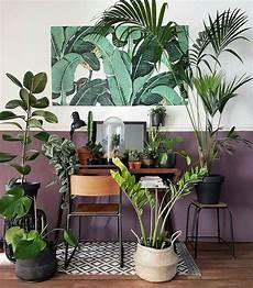 Pflanzen Für Dunkle Ecken In Der Wohnung - plant inspiration bohemian style home decor greens