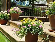 pot de fleurs extérieur 76170 fleurs en pot conseils et id 233 es pour enjoliver le jardin