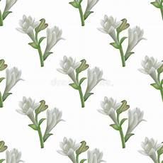 tuberose fiori tuberose reticolo senza giunte piante medicinali della