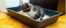 Origine Et D 233 Finition De Nekobaba 猫糞 La Crotte De Chat