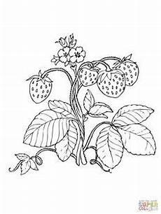 Vorlagen Ostereier Malvorlagen Quark Die 33 Besten Bilder Zu Erdbeere Erdbeeren Snacks F 252 R