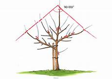 Apfelbaum Schneiden 187 Anleitungen Mit Illustrationen Und