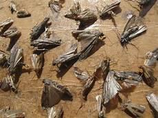 produit de désinsectisation traitement mites bois traitement mites de bois et mites