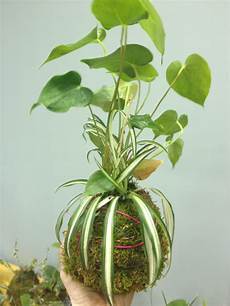 indooroutdoor hanging moss balls filled with plants kokedama moss how to start a vertical garden