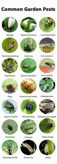 best sure shot organic pest control approaches every gardener should know balcony garden web