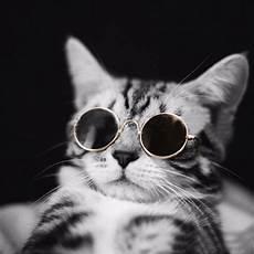 Pet Glasses Glasses Cat For Eye
