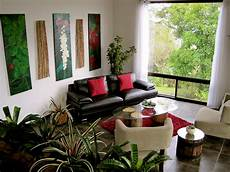 eight common indoor plant myths foliage concepts