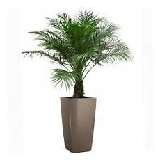 pot pour palmier exterieur plante palmier exterieur en pot recherche