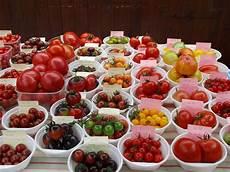 Wie Gesund Sind Tomaten - die tomate eine allgemeine einf 252 hrung