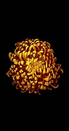 iphone flower wallpaper ios 8 style flowers wallpapers for iphone