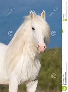 wei 223 es pferd im herbst stockfoto bild braun sommer