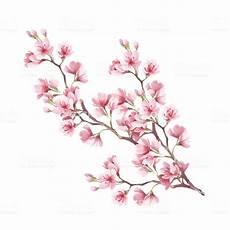 fleur de cerisier dessin branch of cherry blossoms draw watercolor