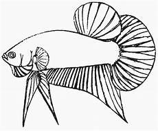gambar mewarnai ikan arwana untuk anak anak contoh anak paud