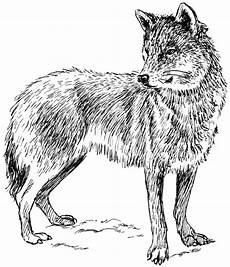 Malvorlagen Wolf Malvorlagen Fur Kinder Ausmalbilder Wolf Kostenlos