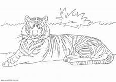 Tiger Malvorlagen Zum Ausdrucken Kostenlos Tiger Zum Ausmalen Ausmalbilder Pferde Viele