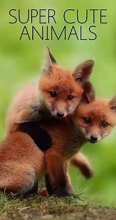 super cute animals movie 2015 imdb