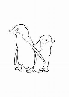 Malvorlage Pinguin Einfach Kostenlose Ausmalbilder Ausmalbild Zwei Kleine Blau Pinguine
