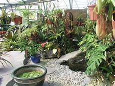 Desain Taman Kecil Tema Tropis