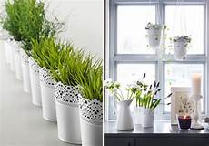 pflanzen deko wohnzimmer besonders reizvolle fensterbank deko