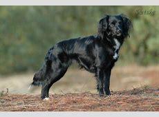 Jou hondenlijst! (met foto)   pagina 2   HondenForum