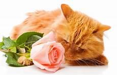 bambino sente l odore di bambino con una rosa fotografia stock immagine di give