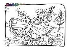 Ausmalbild Schmetterling Wiese Fr 252 Hling Ausmalbilder Malvorlagen F 252 R Kinder Babyduda