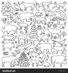 coloring pages animals in the forest 17029 forest coloring pages at getcolorings free printable colorings pages to print and color