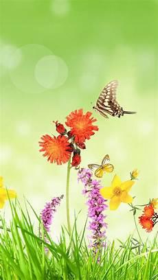 grass flower wallpaper iphone wallpaper flowers grass butterfly green