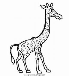 giraffen 28 gratis malvorlage in giraffen tiere ausmalen