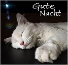 gute nacht katze gute nacht katze katzen gute nacht