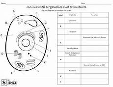 animal cell worksheets 14058 plant and animal cells worksheets for middle and high school students animal cell plant