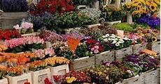 fiera dei fiori 25 fiera dei fiori di piancogno turismo valle camonica