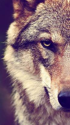 black and white wolf wallpaper iphone wolf wallpaper for iphone x 8 7 6 free on
