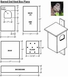 screech owl house plans getting rid of moles in your yard owl house bird house