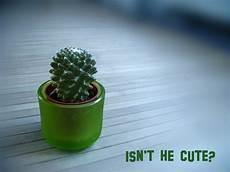 Der Kleine Grüne Kaktus - mein kleiner gr 252 ner kaktus foto bild experimente
