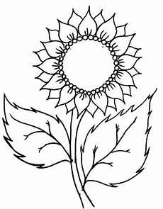 Gambar Sketsa Bunga Matahari Harian Nusantara